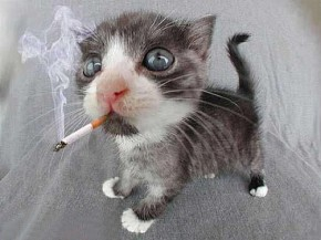 Smoking cat courtesy of sodahead.com